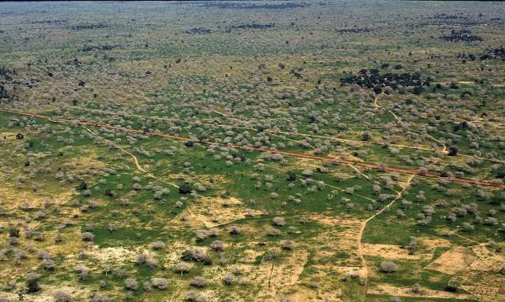 Aerial view of a parkland dominated by Faidherbia in Niger