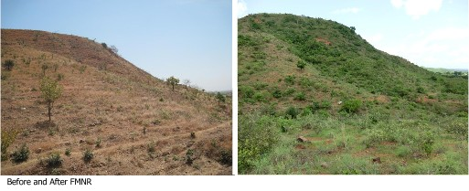 Before After FMNR in Ghana