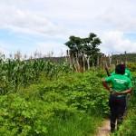 GREEN-FARMING-HIVOS-624x511