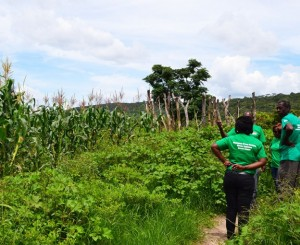 GREEN-FARMING-HIVOS-624x511