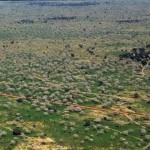 Niger-treed-landscape