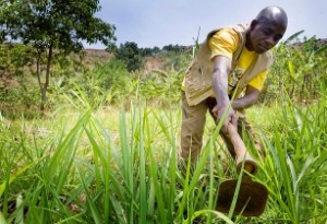 African_farmers_turn_to_climate-smart_agriculture
