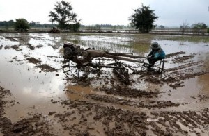 A farmer clears the rice field using a motorized plough, instead of the traditional slash-and-burn method, in Nakhonsawan province, north of Bangkok, Thailand, August 8, 2015. REUTERS/Chaiwat Subprasom/Files