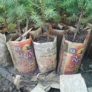 Samuel's innovative and affordable way of potting trees. Photo May Muthuri