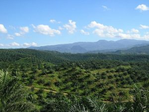 palm_oil_2